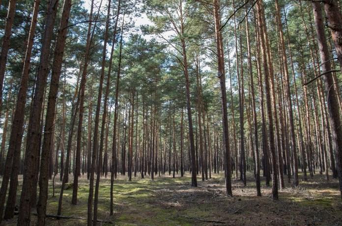 plantations-pour-la-journee-internationale-de-la-foret-avec-lecole-de-ponteilla