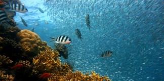 la-restauration-ecologique-marine-un-outil-efficace-pour-ameliorer-la-biodiversite-cotiere-et-une-solution-davenir-pour-aider-les-milieux-marins-mediterraneens