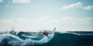 stage-surf-ete-du-1er-juillet-au-10-aout-a-canet