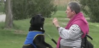 ceremonie-officielle-de-remise-de-chiens-dassistance-avec-la-catalane-handichiens-ce-27-octobre-a-canet2