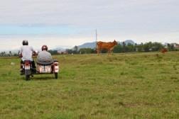 Parcourir des paysages ruraux en sidecar