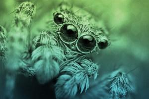 araignée-peur-arachnophobie