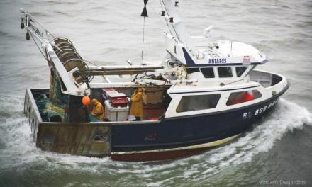 La pêche électrique coule à pic