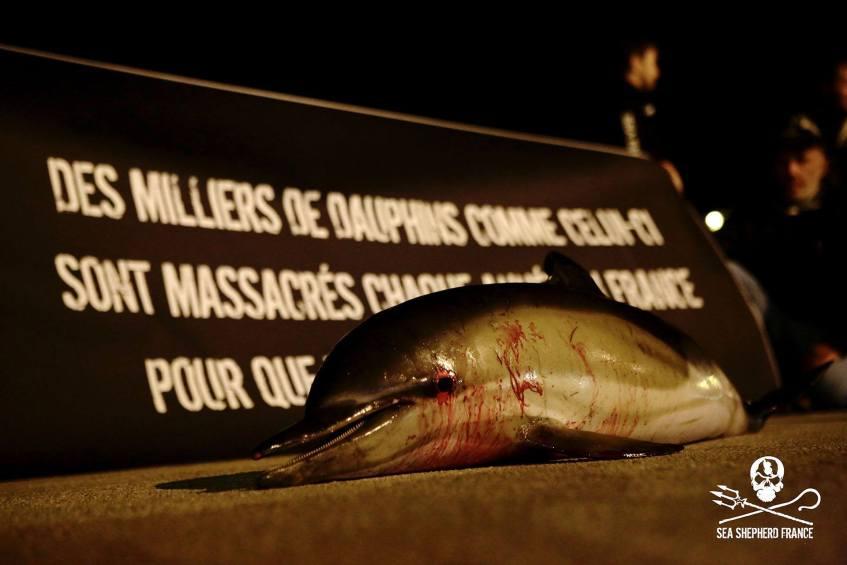 [DATA]  Bientôt plus de dauphins sur le littoral Français ?