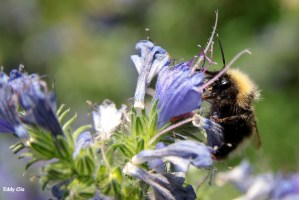 30% des colonies d'abeilles en France disparaîtraient chaque année