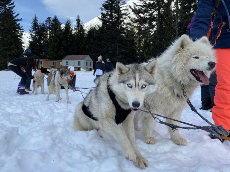 Les chiens de traîneau, rois de la montagne près de St Lary dans les Pyrénées. Crédit : Guillaume Pannetier