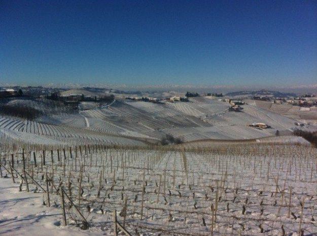 Snowy vineyards in Piedmonte