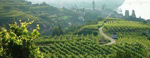 Salomon-Undhoff-Vineyards-Kögl and Pfaffenberg