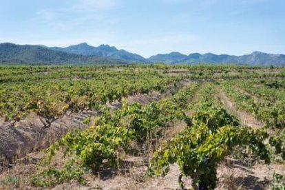 Acustic celler vineyard - Monsant