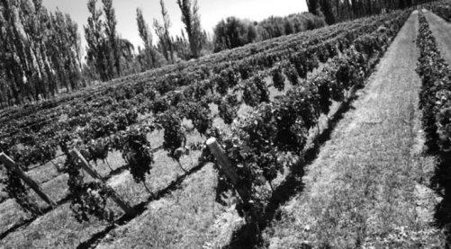 Bodegas Chacra - Patagonia- Estate Vineyard