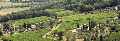 Fuligni-Brunello-Di-Montalcino---Lea-and-Sandeman-Wine-Merchants