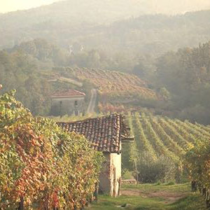 Boca-vineyards-Piedmont