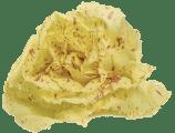 radicchio variegato