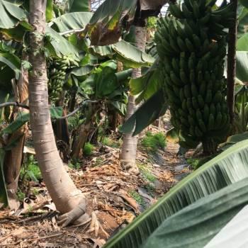 Leader-Frutta-Giarre (9)
