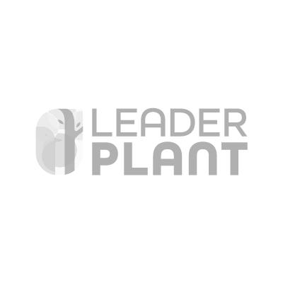 bambous de taille moyenne bambous
