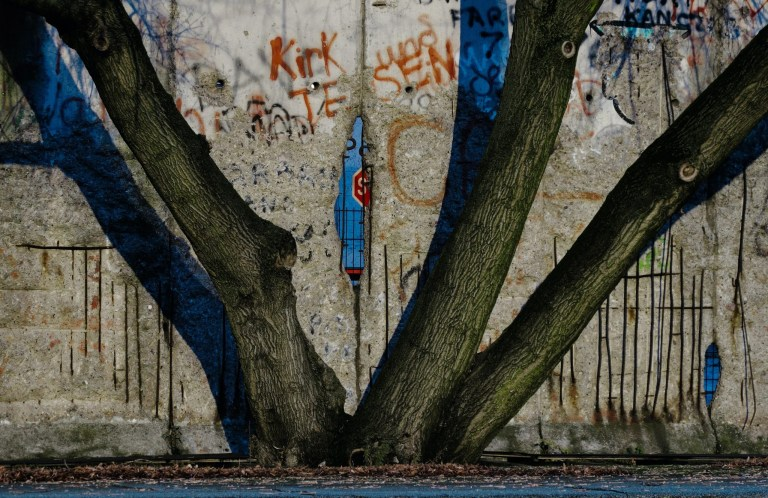 Divide, tree, urban