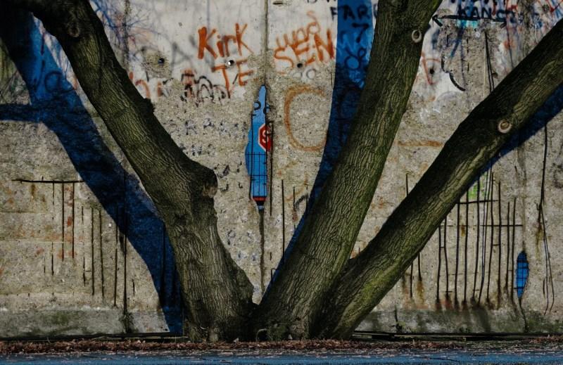 Divide, tree, urban