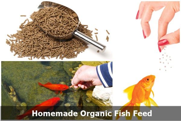 Make healthy and organic food to feed your fish leaffin for Organic fish food