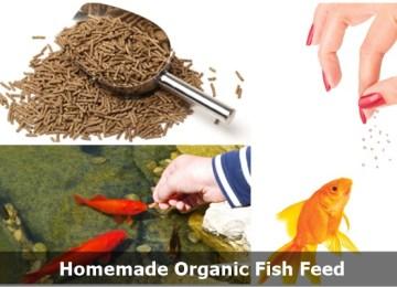 Homemade Organic Fish Food