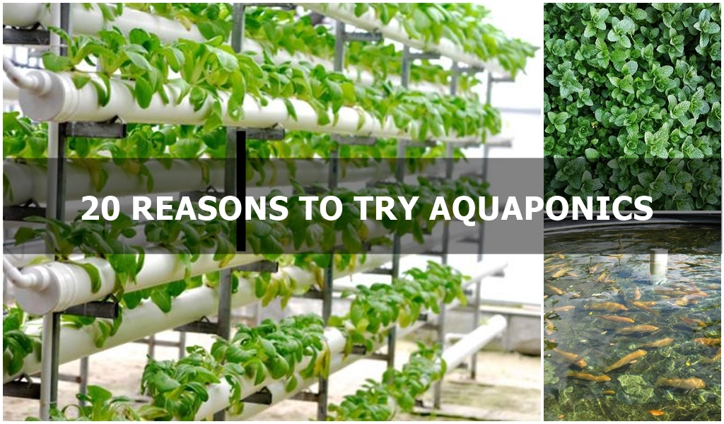 Leaffin Reason Aquaponics