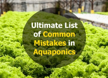 Ultimate list of common mistakes in aquaponics