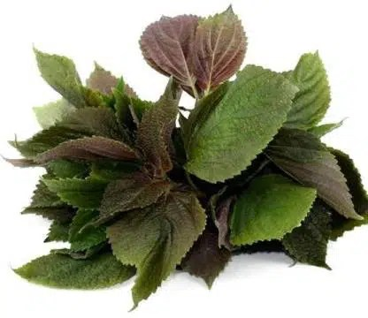 Buy Perilla Seeds Online - Leaf Reidrich B.V free fruits supplier in europe.