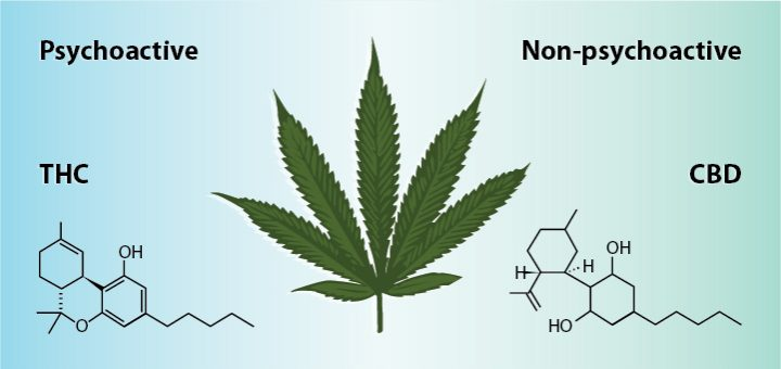 Image result for difference between CBD derived from hemp and CBD derived from marijuana?