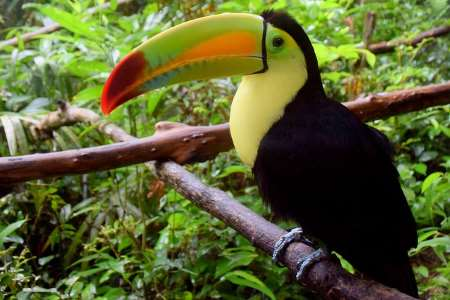 Among some of the most endangered are these amazing, unique, and beautiful birds. Tropical Rainforest Animals And Plants With Pictures And Names