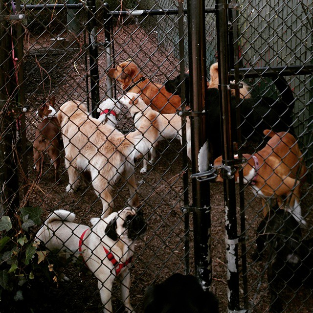 Dog park traffic jam.