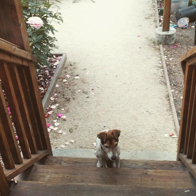 Let me in please.