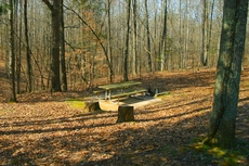 Photo Picnic Table in Deep Woods by Aron Hsiao