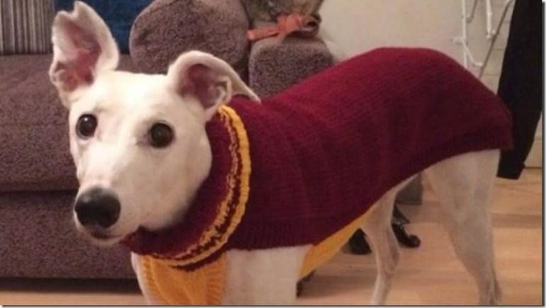 perros-de-la-calle-ropa-reino-unido