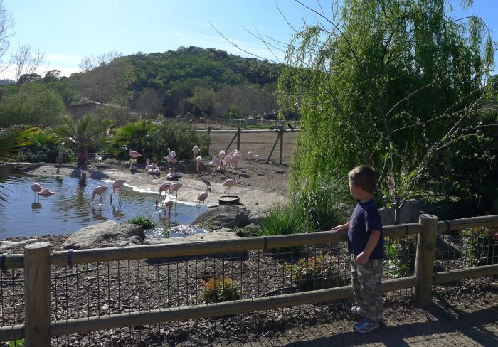 safari west vacation