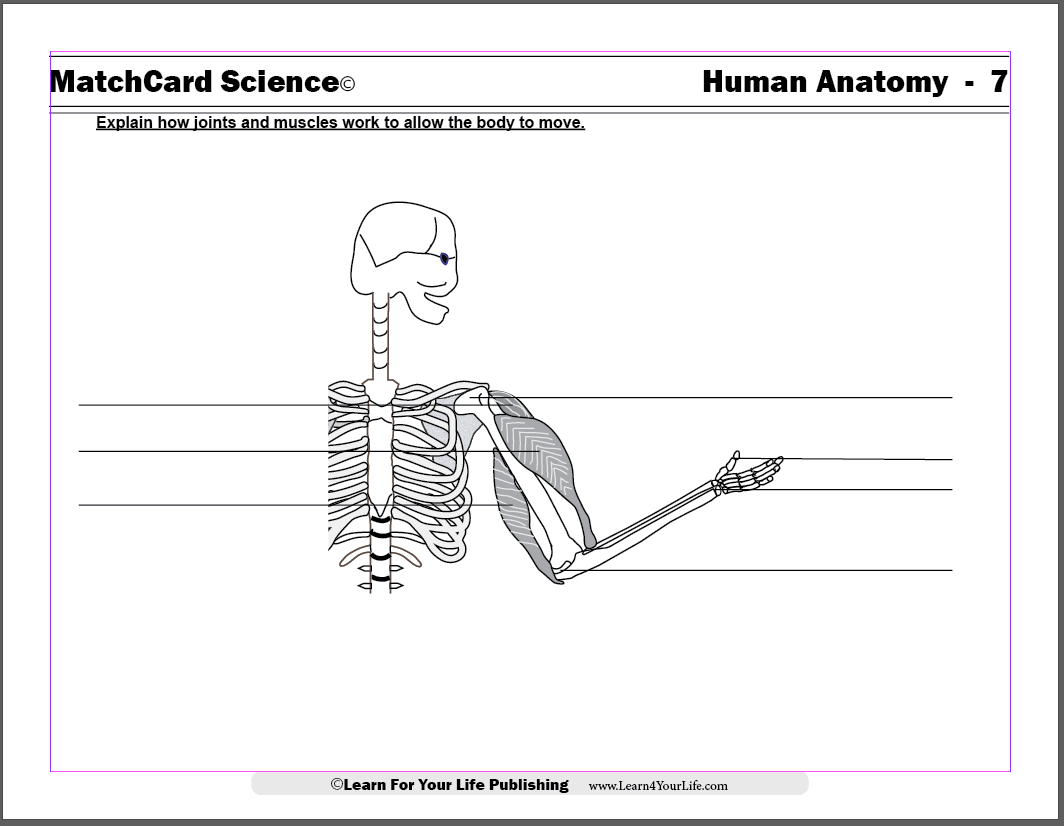 Anatomy For Children