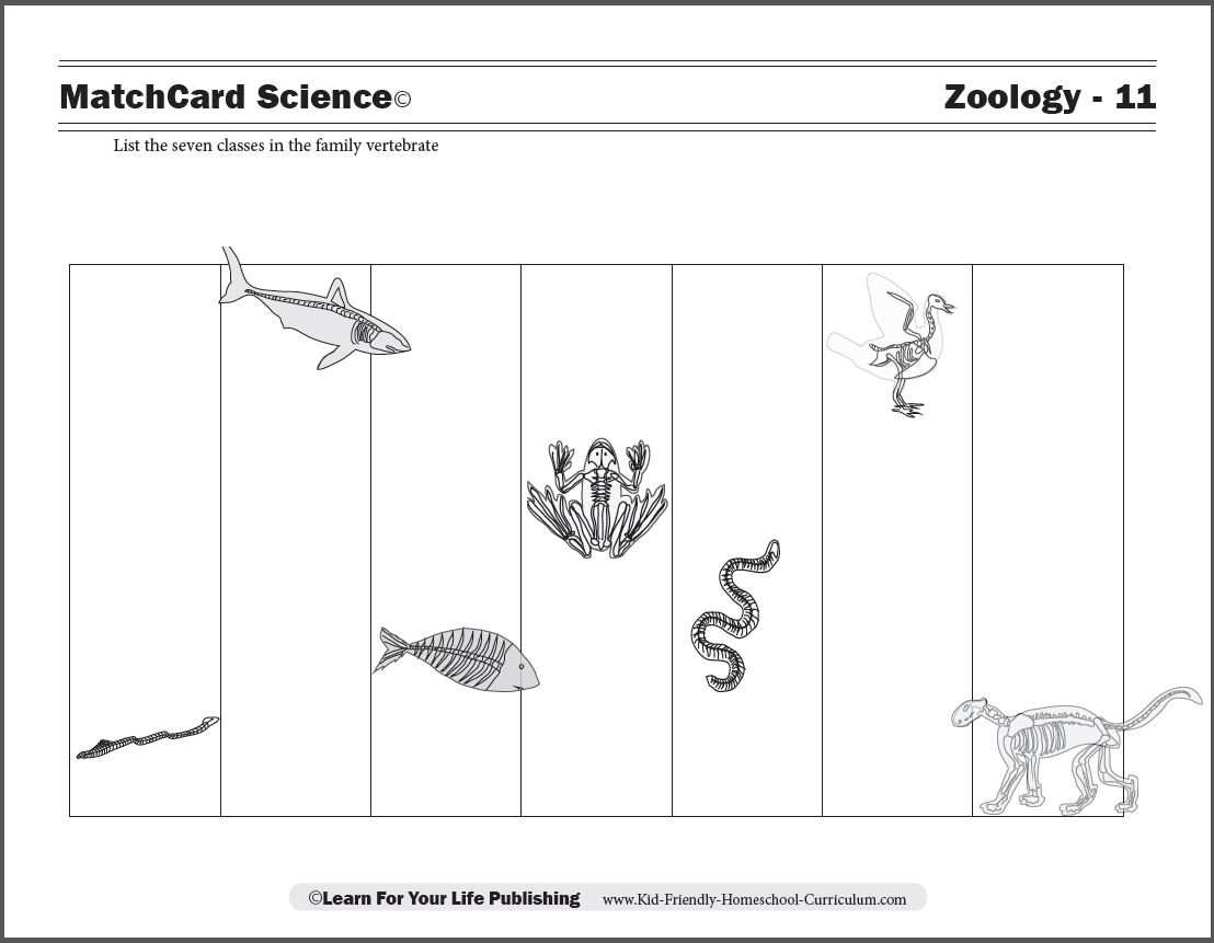 Vertebrate Worksheets For Kids