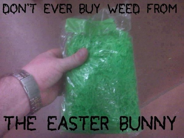 weed-easter-bunny-funny-weedmemes