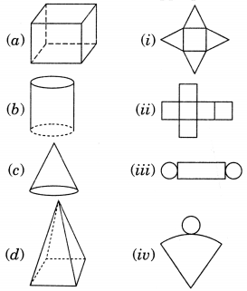 NCERT Solutions for Class 7 Maths Chapter 15 Visualising Solid Shapes 7