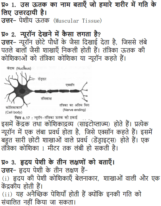 NCERT Solutions for Class 9 Science Chapter 6 Tissues Hindi Medium 3