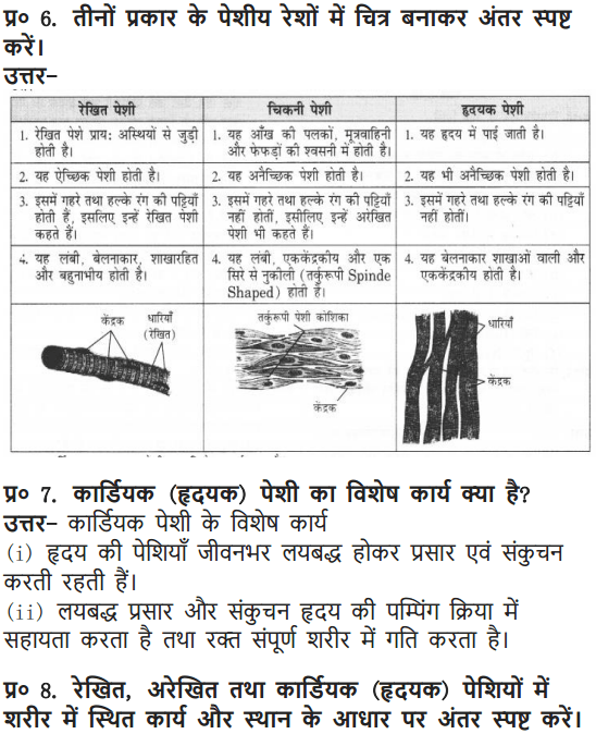 NCERT Solutions for Class 9 Science Chapter 6 Tissues Hindi Medium 6