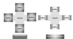 fluoride-and-thyroid-receptor-pic