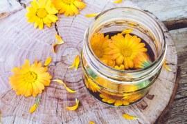 酯化型葉黃素與游離型葉黃素從金盞花萃取