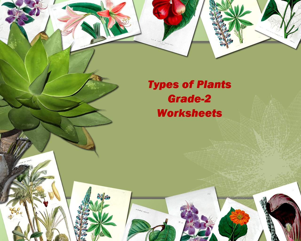 Grade 2 Evs Types Of Plants Worksheets Test Papers