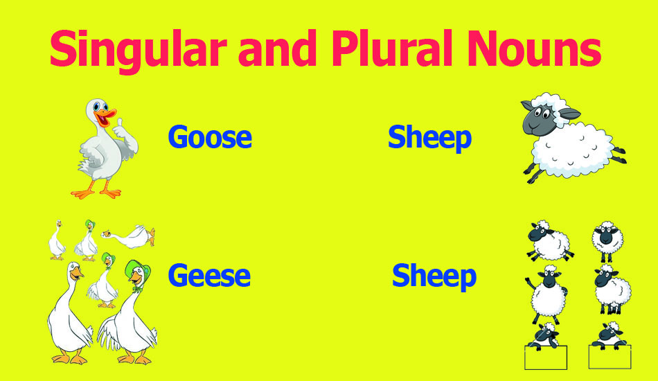 singular and plural nouns learn esl