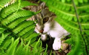 cat-behind-plant-leaves