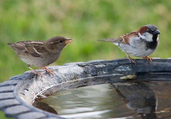 how to may i make a bird bath