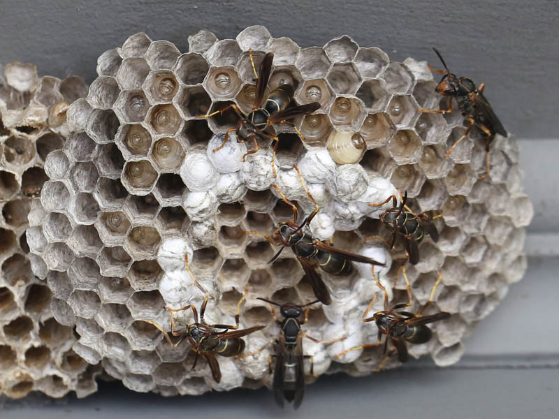 Posts Tagged How To Get Rid Of Wasp Nest In Roof