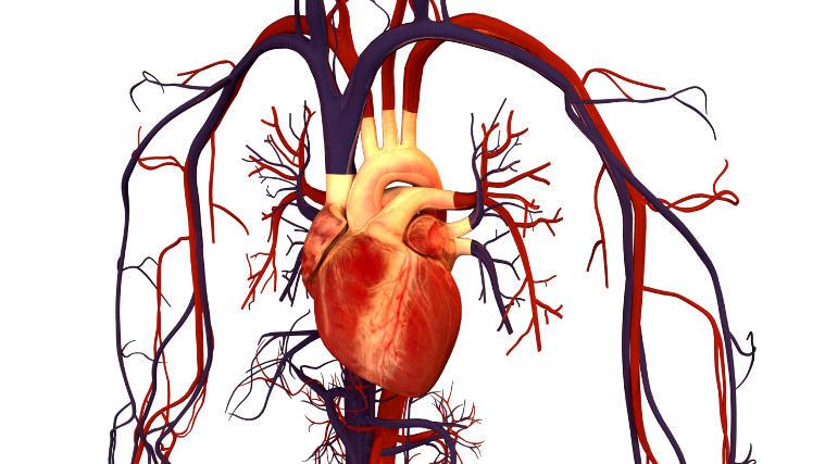 Cardiovascular System lack of sleep