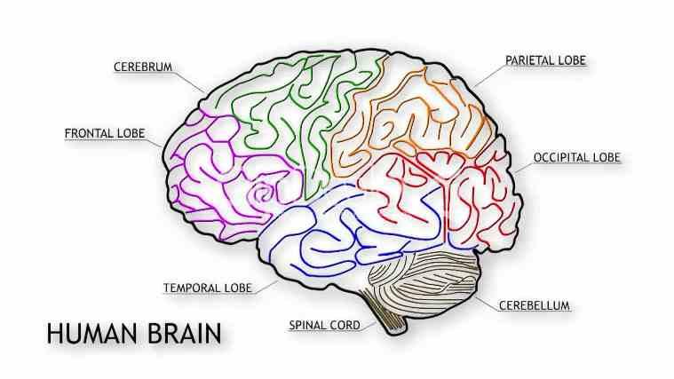 brain lack of sleep
