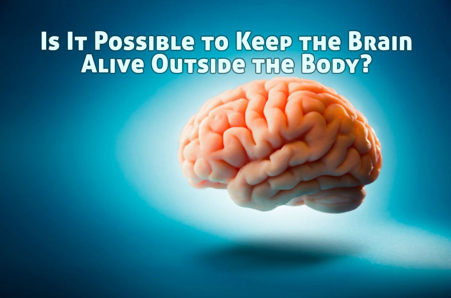 is it possible to keep the brain alive outside the body