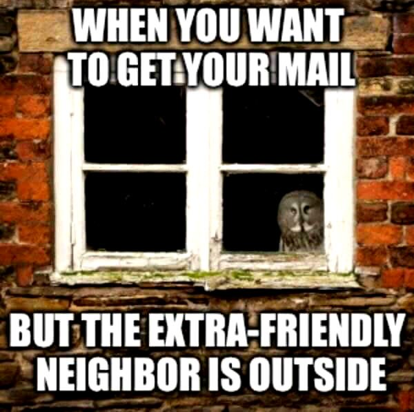 Truths Introverts Want to Tell You neighbor